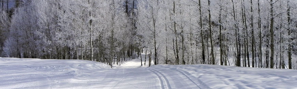 Nordic Winter Trail